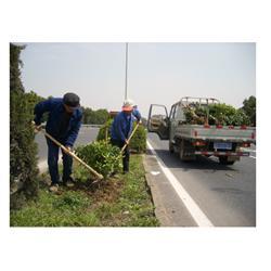 福建绿化工程厂家-专业提供绿化工程图片