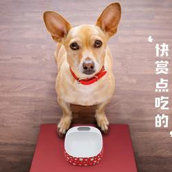 新品宠物狗狗猫咪餐垫子 耐磨防滑防溢出防潮食品级硅胶餐垫图片