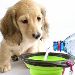 狗狗外出喝水碗户外遛狗便携折叠硅胶食盆金毛泰迪随行杯宠物用品图片