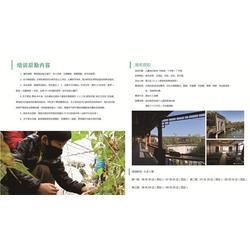 抚州记忆力-南昌乐晨教育培训-记忆力课程合作