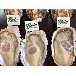 厦门刺身生蚝-信誉好的刺身生蚝供应商-贝拉水产图片