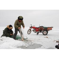 大量出售乌苏里江细鳞鱼,乌苏里江细鳞鱼厂家图片