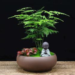 莱西绿植有哪些好处-卓进源花卉提供专业的绿植盆栽