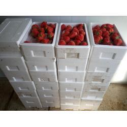 吉林草莓采摘园哪家好-辽宁采摘园基地基地哪家好图片