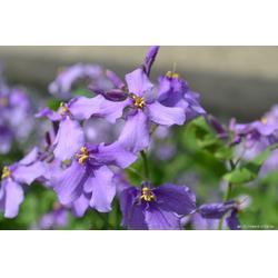 想买品质好的花卉种子,就到宁夏上谷农牧-石嘴山花卉种子