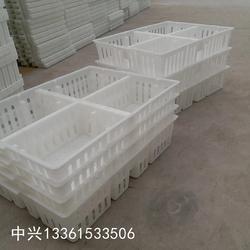 厂家快速雏鸡筐塑判断出了料鸡苗箱尺寸小鸡苗基本没有什么意识运输笼图片