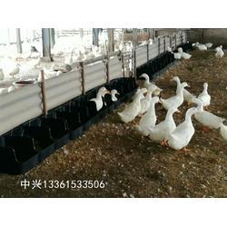 鸭产蛋箱 鸭蛋窝设计 鸭子集蛋窝热卖图片