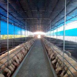 养殖场专用卷帘帆布-防水羊圈卷帘布尺寸定做图片