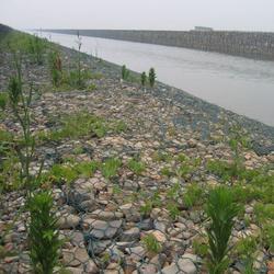 内蒙古普锌雷诺护垫-河北销量好的普锌雷诺护垫图片