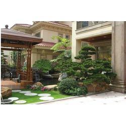 绿化养护-我有花专业提供庭院绿化批发
