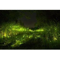 呼吸之光灯光展 丛林一样的灯光图片