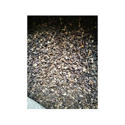 石家庄白附子种苗-供应辽宁质量好的白附子种苗图片