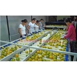 优质食品流水线 食品输送线销售图片