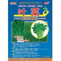 叶菜专用冲施肥防治霜霉病图片