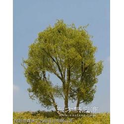 仿真模型树图片
