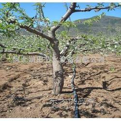 梨樹滴灌山區紊流器滴頭圖片