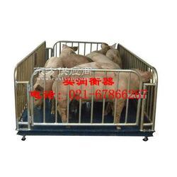 3吨猪笼电子磅称猪用的地磅图片