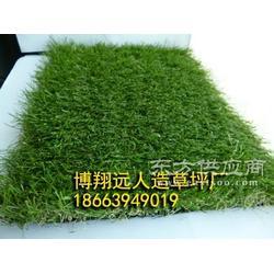 仿真草皮-塑料人造草坪厂家图片