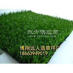 人造草坪 博翔远供应人造草坪 健康绿色环保图片