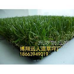 塑料装饰景观草坪厂家图片