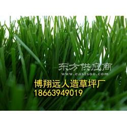 加茎单丝足球场人工草坪厂家图片
