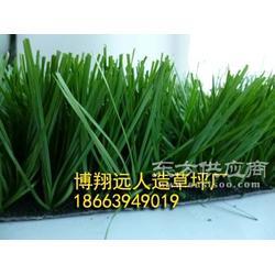 工程绿化装饰草坪厂家图片
