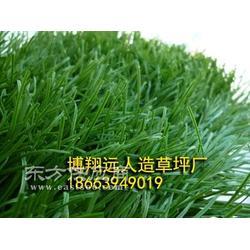 景观休闲草厂家图片