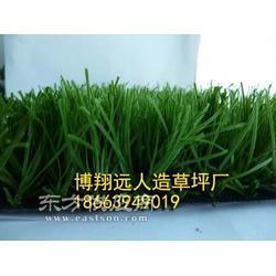 室外绿化草坪厂家图片