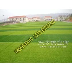 塑料草坪多少钱一平米图片