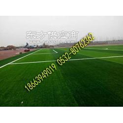塑料人造草坪-学校足球场草坪图片