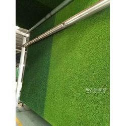 环保假草坪地毯厂家图片