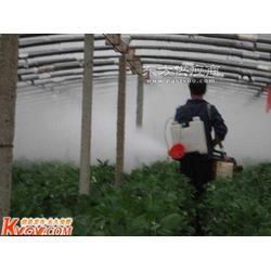 新型果树烟雾机图片