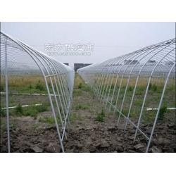 薄壁温室大棚管蔬菜大棚管生产厂4分6分图片