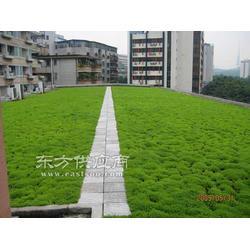 足球场人造草皮PU硅地板塑胶跑道施工优价图片