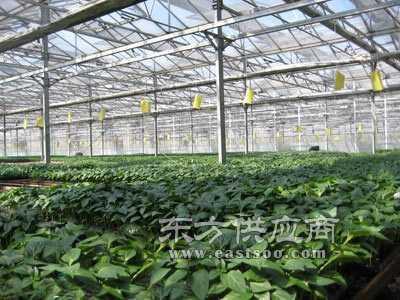 pc阳光板温室大棚图片