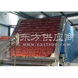 大蒜烘干设备生产厂家图片