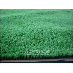 草坪地毯/塑料草坪/仿真草坪/园林绿化景观草图片