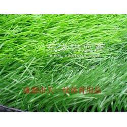 足球场草坪 足球场丙烯酸塑胶跑道 足球场围网图片
