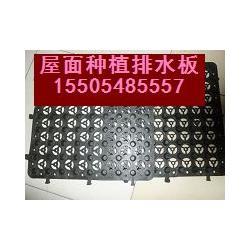 合肥蓄排水板_绿泰蓄排水板专业厂家_中国蓄排水板基地图片
