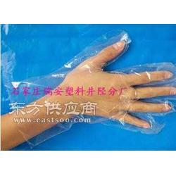PE透明塑料手套图片