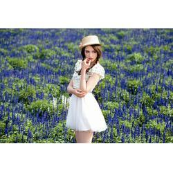 广州韩国女装、韩国女装返装修费、金蝶妮服装(认证商家)图片