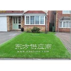屋顶景观草坪别墅庭院高档草坪假草皮图片
