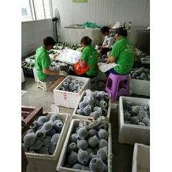 龙口云生厂家(图)|哈密瓜网套机|南京网套机图片