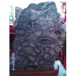 泰山奇石成为石界的一只奇葩图片
