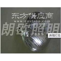 供应高品质养殖灯泡图片