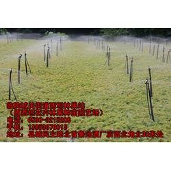临朐樱桃苗(图)|大樱桃树|六盘水樱桃树苗图片