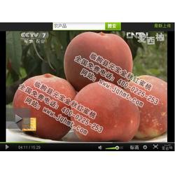 桃树新品种厂家、元宝金秋红蜜桃(在线咨询)、桃树新品种图片