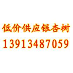 【福建银杏树】,12公分银杏树市场,聚缘银杏低价供应图片