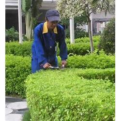 办理园林绿化公司、景致花园绿化(在线咨询)、进贤县园林绿化图片