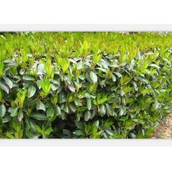 铜鼓县绿化养护-景致花园绿化企业-高速公路绿化养护图片